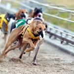 La velocidad de los animales, atraen apuestas